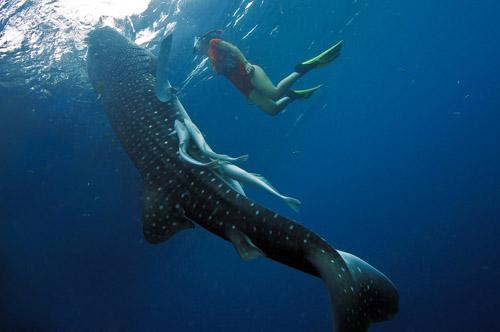 joli & Whale Shark 2